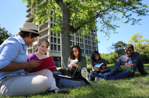 Students sitting outside beneath a tree